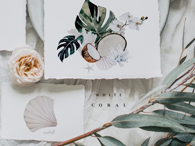 White coral - watercolor set