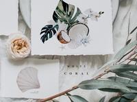 White coral - watercolor set