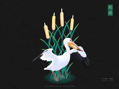 《飞鸟集 》-鹈鹕