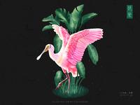 《飞鸟集》-琵鹭