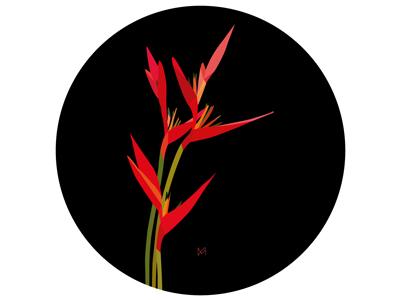 Illustration 'Heliconias'