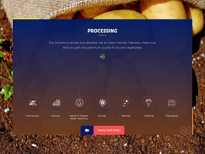 Infographic section in website illustration colorful design adobe xd ux design web desgin vibrant simple design uidesign modern design organic food farming agricultural agriculture