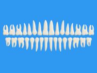 Free Teeth (PSD)
