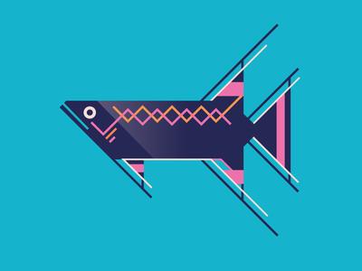 Lyretail Killifish Illustration