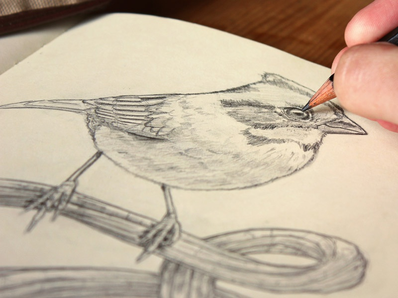 Bird... lettering bird sketch paper pencil wood branch