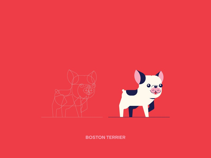 VectorBreeds (Boston Terrier) boston terrier breed dog illustration digital art mascot character design vector vectors illustrator illustration graphic design