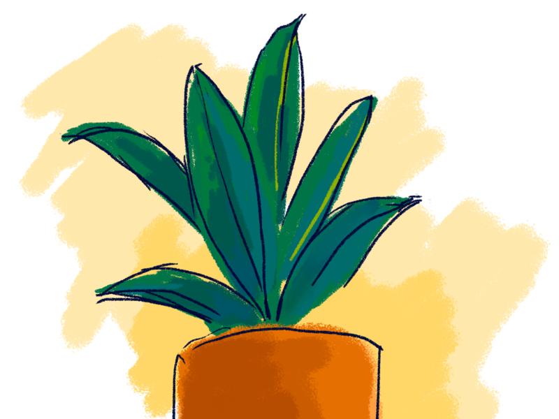Plant illustration wacom photoshop illustration