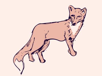 Fox fox illustration fox illustration sketch