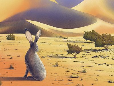 Death Valley National Park vegetation rocks animal dune valley death rabbit desert