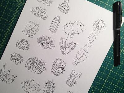 Succulents cacti desert drawing illustration julieta felix plants green hand-drawn cactus succulents ink wip