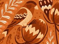 Birds of Mallorca