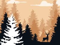 Pine morning