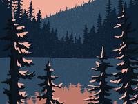 Where the pine trees meet the ocean