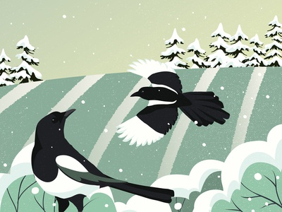 Magpies and snow