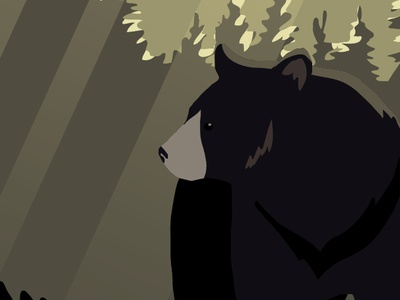 Bear morning