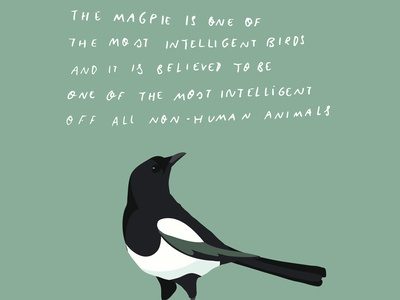 Magpie facts I