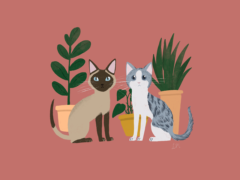 Maui & Merlin potted plants plants two cats maui merlin cats animals illustration procreate