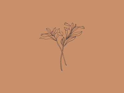 Plant illustration line drawing line art plant illustration plants plant flowers flower illustration flower art artwork illustration vector design
