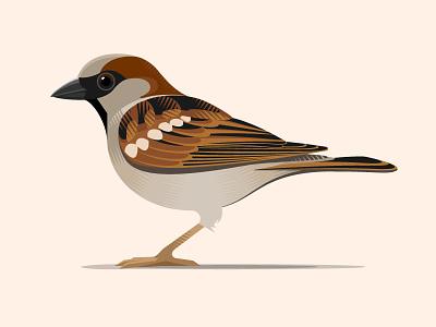 House Sparrow animal wildlife vector bird