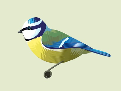 Blue Tit wildlife vector bird animal