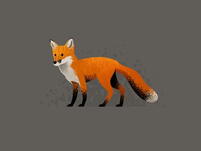 Wildlife Poster - Red Fox animal vector fox wildlife
