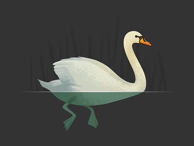 Wildlife Poster - Mute Swan bird wildlife vector swan animal