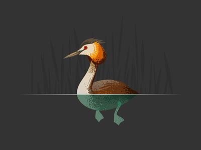 Wildlife Poster - Great Crested Grebe wildlife vector grebe bird animal