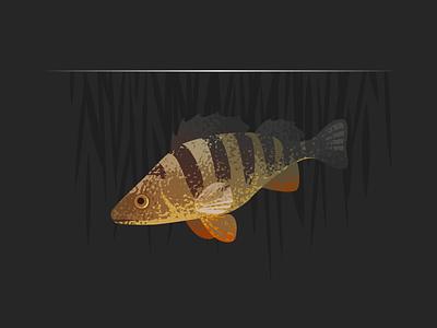 Wildlife Poster - Perch wildlife vector perch fish animal