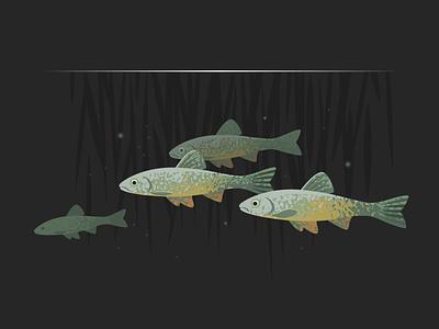 Wildlife Poster - Dace shoal freshwater wildlife vector fish dace animal