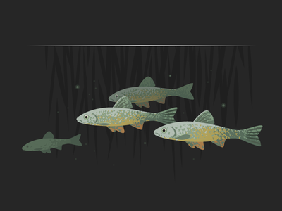 Wildlife Poster - Dace shoal