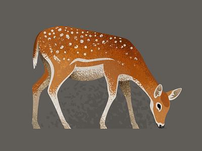 Wildlife Poster - Fallow Deer wildlife vector fallow deer animal