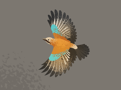 Wildlife Poster - Jay wildlife vector jay bird animal