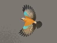Wildlife Poster - Jay