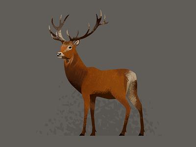 Wildlife Poster - Red Deer wildlife vector deer red animal