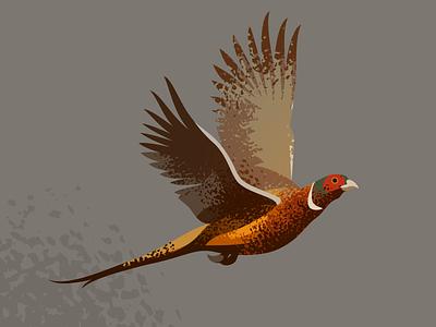 Wildlife Poster - Common Pheasent wildlife vector pheasent bird animal