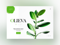 Clean & Green Website Design