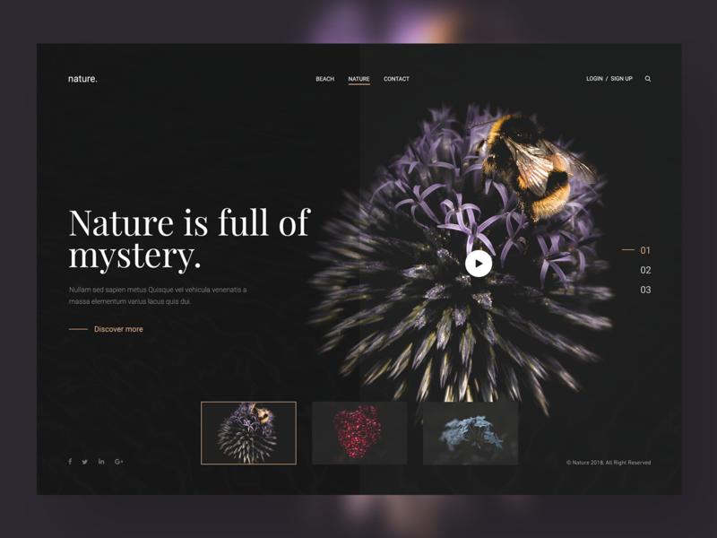 Nature Website Design branding natural language photography typography responsive designer webdesign inspiration animals natural history design ux ui website nature
