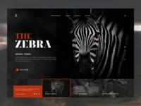 The Zebra - animal website design
