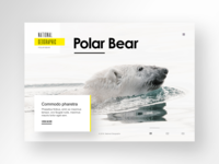 National Geographic Website Design