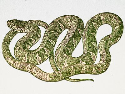 Snake ... design vector art drawing illustration snake vector graphic vector illustration
