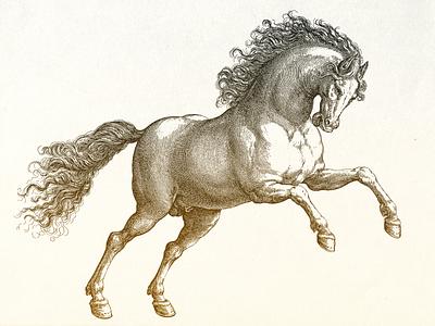 Stallion II ... vector stallion horse illustration vector graphic vector illustration