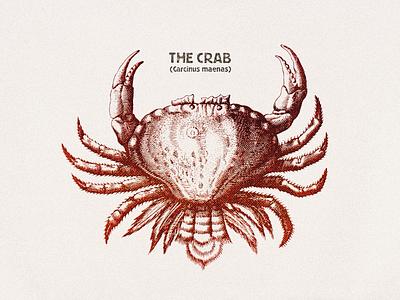The Crab ... retro grungy vintage illustration crab vector graphic vector art vector illustration