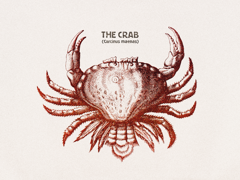 The Crab ... retro grungy vintage illustration crab vector graphic vector art vector illustration