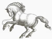 Stallion III ... vector graphic stallion horse drawing illustration vector art vector illustration