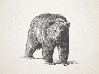 Grizzly Vector WIP ... vector graphic bear grizzly