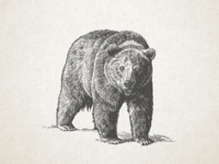 Grizzly Vector WIP ...