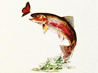 FISH II .... design graphic trout salmon fish vector graphic vector art vector vector illustration