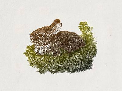 Bunny ... bunny vector illustration vector graphic illustration