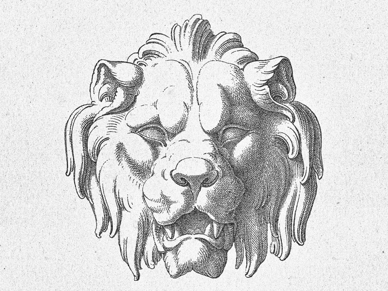 Lion's Head ... head lion vector graphic vector art illustraion vector illustration