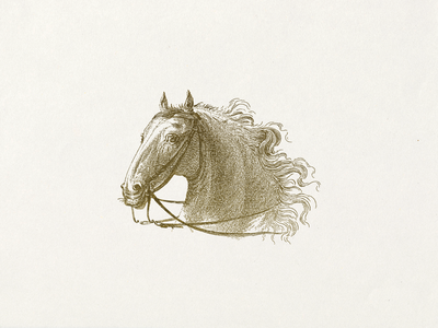 Horse VII ... lineart horse vector graphic vector illustration illustration
